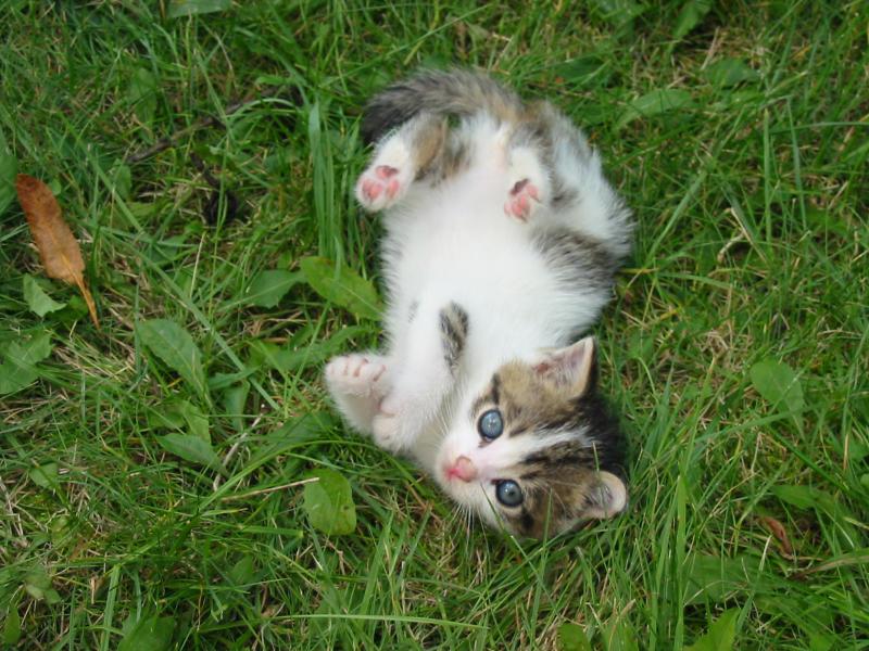 Stray Kitten on grass