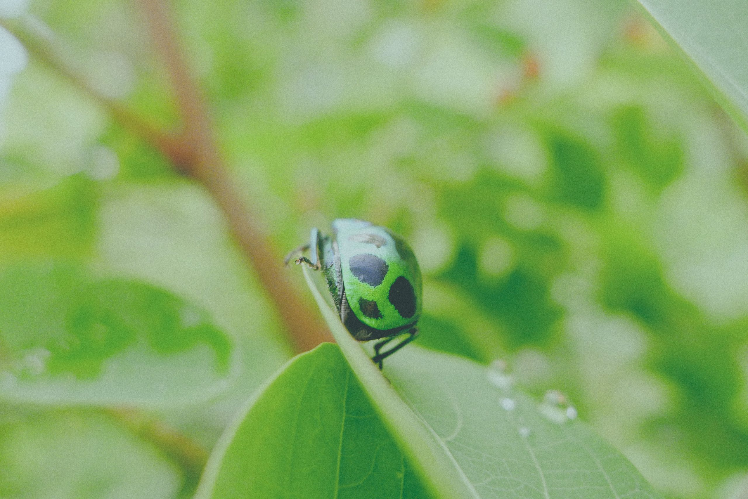 """Green bug on tree"" Photo by Haley Photography on Unsplash"